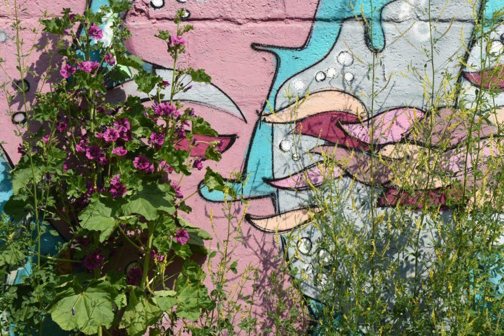 Blühende Malven und Büschelschön vor der Wand der Halle des GarageLab e.V.